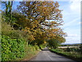 TQ4856 : Autumnal tree along Ovenden Road by Ian Yarham