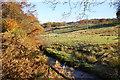 SJ9868 : Clough Brook by Bill Boaden