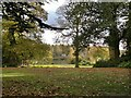 SK6274 : Clumber Park, through the trees, across the lake by Chris Morgan