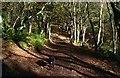 SJ5255 : Bulkeley Hill Wood by Jeff Buck