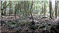 SW7837 : Broadleaf woodland north of Stockdale by Stuart Logan