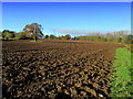SE3063 : Ploughed Field by Water Lane by Chris Heaton