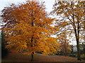 SK5640 : Nottingham, NG7 - Arboretum : Week 46