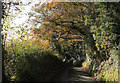 ST5863 : 2012 : Down Norton Lane to Chew Magna by Maurice Pullin