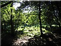 SJ4952 : Bickerton Hill Woodland by Jeff Buck