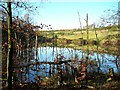 SK5860 : Pond at Strawberry Hill Heath SSSI by Antony Dixon