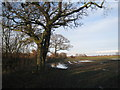 SE6817 : Waterlogged field and ploughed up path by Jonathan Thacker