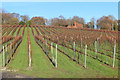 TQ7825 : Vineyard at Bodiam by Oast House Archive