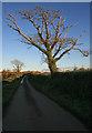 SX4054 : Lane from Antony towards St John by roger geach
