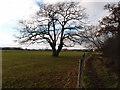 TF1005 : Oak tree in pasture land by Michael Trolove