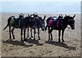 SD3128 : Life Is A Beach For Donkeys @ St Annes by Douglas Law