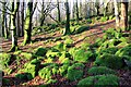 SH6737 : Moss Covered Rocks near Trawsfynydd by Jeff Buck