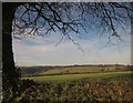 SX4866 : Countryside south of Buckland Abbey by Derek Harper
