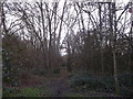 TQ2773 : Woodland Path in Wandsworth Common by David Anstiss