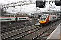 TQ2982 : Pendolinos at Euston Station by Roger Templeman
