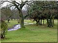 SO9094 : Penn Golf Course near Wolverhampton by Roger  Kidd