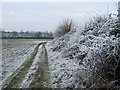 TL7038 : Frozen Hedge by Keith Evans