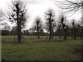 SJ7387 : Trees in front of Dunham Massey hall by Stephen Craven
