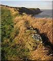 NZ9308 : Cleveland Way west of Maw Wyke Hole by Derek Harper