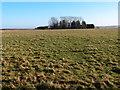 TL0168 : High Barn Farm and Manor Farm by Michael Trolove