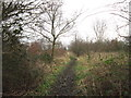 TA1134 : The Community Woodland on Noddle Hill Way, Hull by Ian S