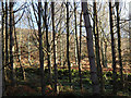 SK2867 : Woodland edge below Fallinge Edge by Andrew Hill