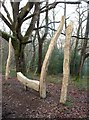 SX7878 : Wooden carvings, Yarner Wood by Derek Harper
