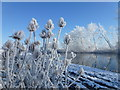 TL5394 : Hoar frost and The River Delph - The Ouse Washes near Welney by Richard Humphrey