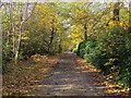 TQ0182 : Beeches Way by Shaun Ferguson
