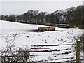 SE2318 : Winter cattle at Foxroyd Shrogg by Christine Johnstone