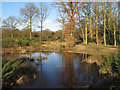TL7803 : Temporary pond on Danbury Common by Roger Jones