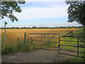SK8468 : Flat arable land south of Spalford by Trevor Rickard