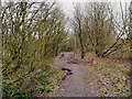 SJ5996 : Golborne Park Wood, Path to Castle Hill by David Dixon
