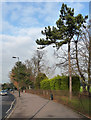 TQ3272 : Trees, Alleyn Park by Stephen Richards