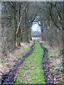 SJ7097 : Farm Track through Rindle Wood by Anthony Parkes