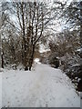 SO9194 : Snowy Park Path by Gordon Griffiths