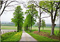 NY4546 : Tree Lined Road by David Liddle