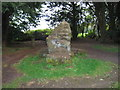 SP8909 : Wendover Woods [Haddington Hill] by Rude Health