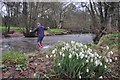 ST1021 : Taunton Deane District : Snowdrops & The River Tone by Lewis Clarke