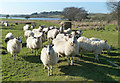 Dist:0.4km<br/>I don't know if these sheep at Martnaham Loch expected to be fed or if they were just curious about the stranger on the other side of the fence. They didn't stay for long.