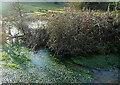 SP3325 : River Glyme by Graham Horn