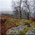 SK2772 : Lichens, bracken and silver birch; Gardom's Edge by Peter Barr