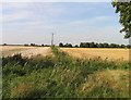 TL3789 : Fields to the north of Dykemoor Drove by Andrew Tatlow