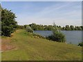 TL3876 : Earith Lake Fisheries lakeside by Andrew Tatlow
