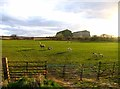 TL0847 : Fields west of Southill Road by Andrew Tatlow