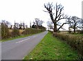 TL1243 : Bedford Road towards Old Warden by Andrew Tatlow