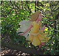 SK6085 : Hodsock's fairy by Steve  Fareham