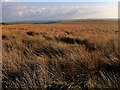 SD9831 : Moorland between Shackleton Knoll and Black Hill by Phil Champion