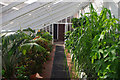 SP0583 : Inside the glasshouse at Winterbourne by Phil Champion