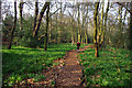 SP0584 : Path through the bluebells at Edgbaston Pool Nature Reserve by Phil Champion
